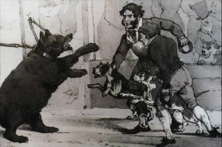 combat bouledogue francais contre des ours