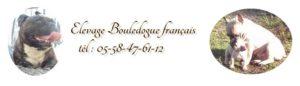 élevage bouledogue français
