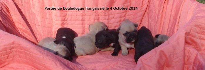 chiots bouledogue français né 04octobre