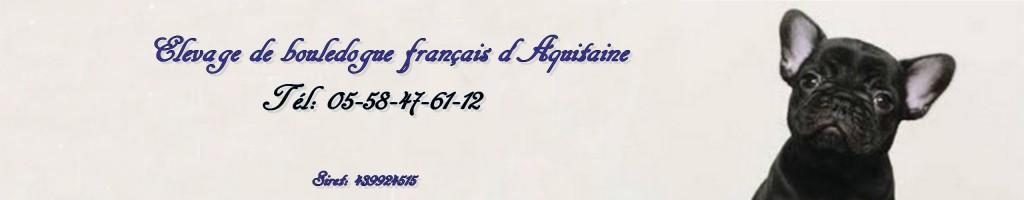 Elevage bouledogue français