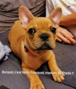 bonsoir c'est Mme Nelly Fourquet maman de Prada !!