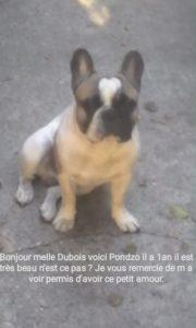 Bonjour madame Dubois, voici Pondzo, il a 1 an, il est tres beau n'est ce pas ? Je vous remercie de m'avoir permis d'avoir ce petit amour