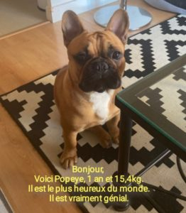 Voici Popeye, 1 an et 15,4 kg. Il est le plus heureux du monde. Il est vraiment génial.