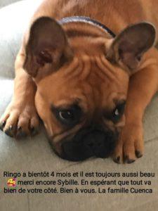 Ringo à bientôt 4 mois et il est toujour aussi beau, merci encore Sybille. En esperant que tout va bien de votre coté. Bien vous. La famille Cuenca